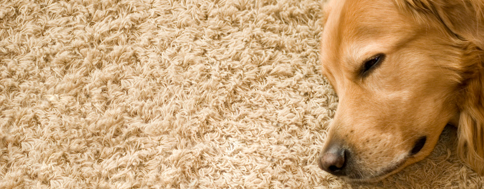 Carpet Cleaning – Highland Park IL