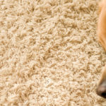 Five Ways Pet Odor in Carpet and Furniture Affects Your Health- Carol Stream, IL