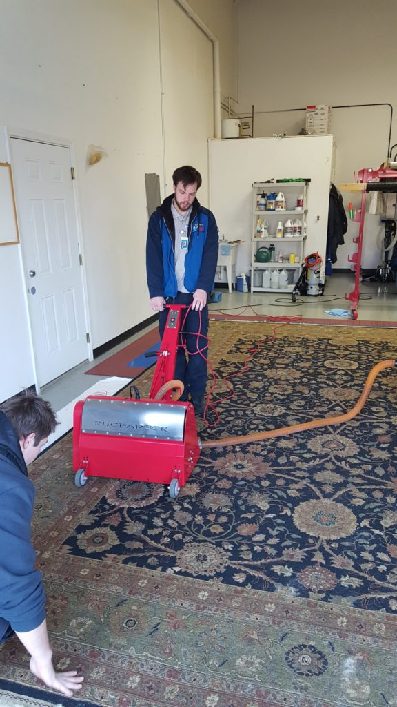 Oriental Area Rug Dusting - Cleaning