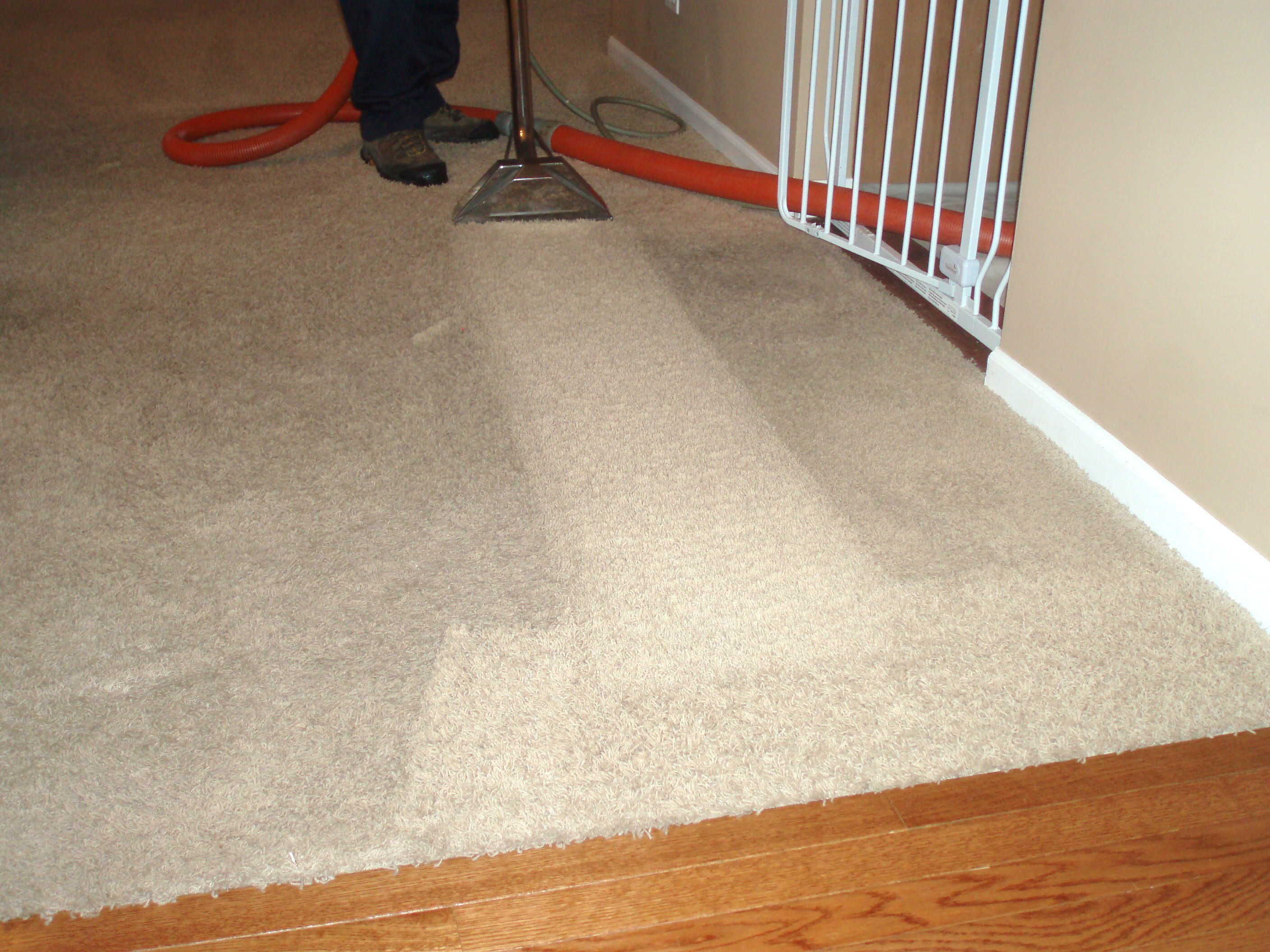 Carpet Cleaning It S Just Good For You Wiz Team