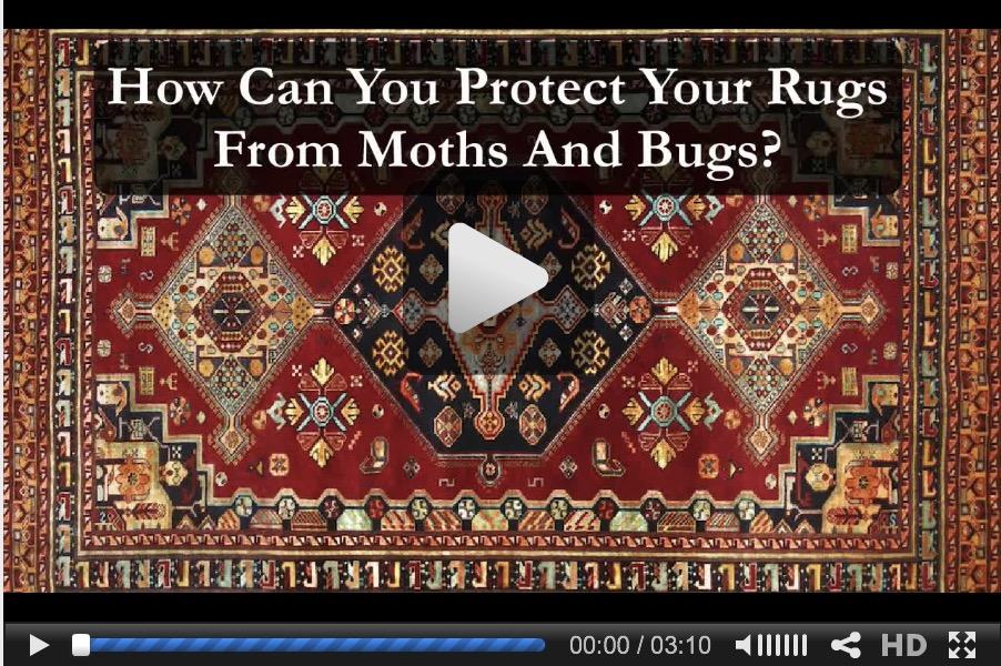 Bugs in Area Rug